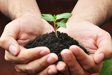 plant in hand from organic soil