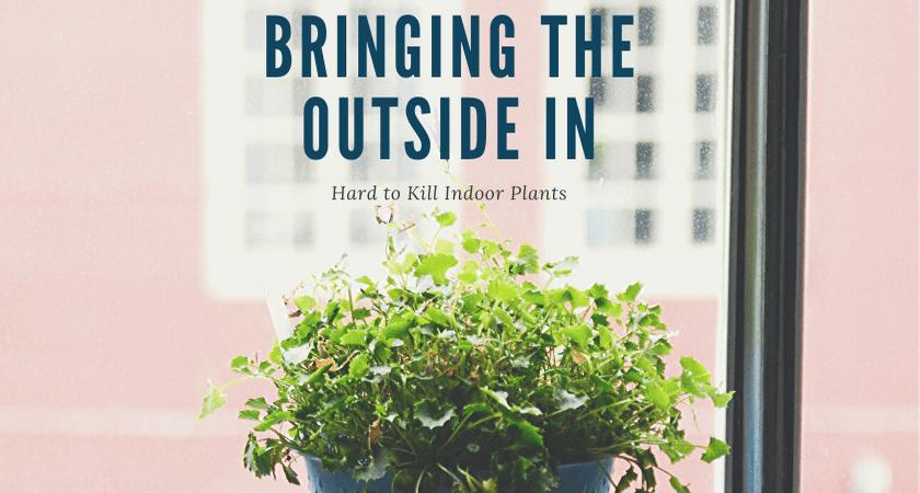 Hard to kill indoor plants