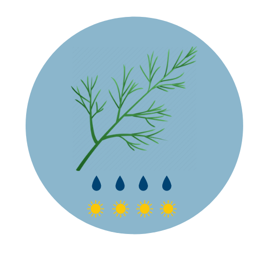 summer herbs dill icon
