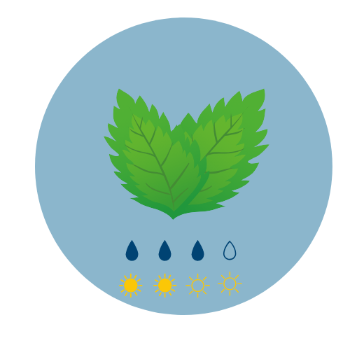 Summer herb mint icon