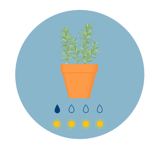 Summer herbs rosemary icon